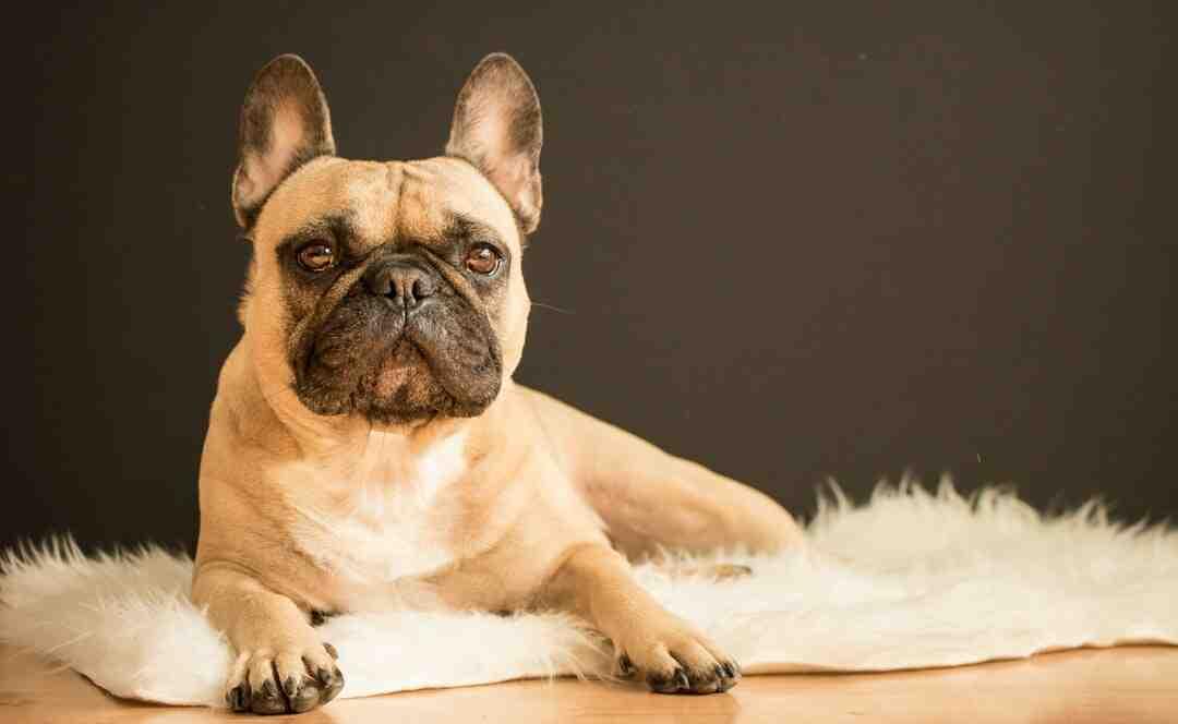 Problèmes de peau chien